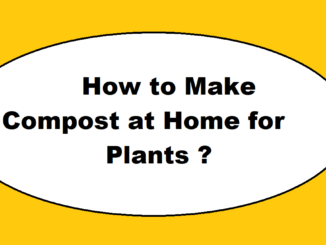 How to Make Compost at Home for Plants